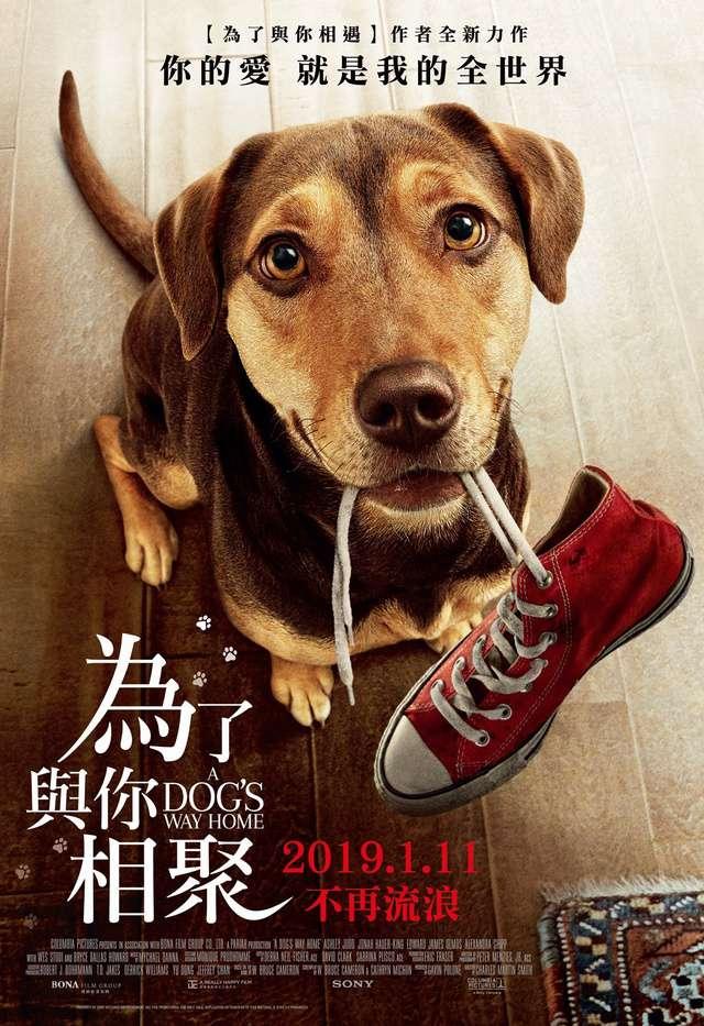 為了與你相聚_A Dog's  Way Home_電影海報
